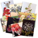 assorted-note-cards-3