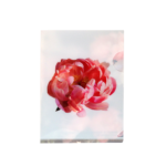 peony-A6-front1