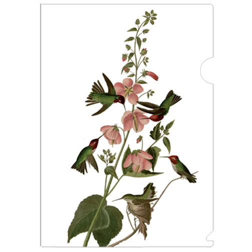 a half-letter sized folder easily fit inside a pocketbook, printed with John James Audubon (1785-1851)'s Columbian Hummingbird sketch. Audubon was a French-American ornithologist, naturalist, hunter and artist, who painted, catalogued and described the birds of North America