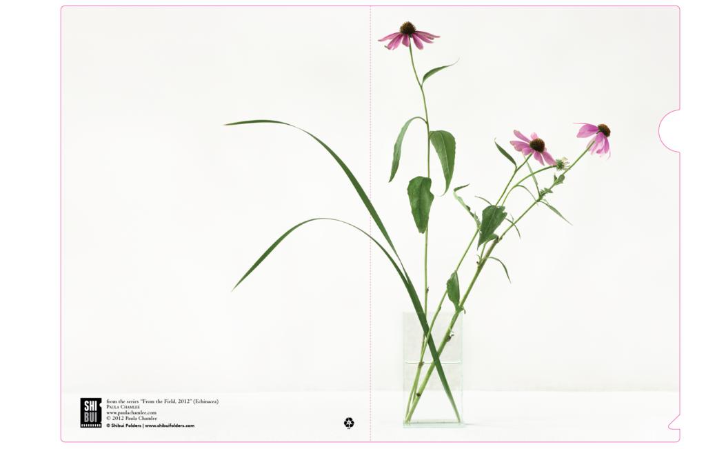 A4-440x310-Chamlee-Echinacea 2