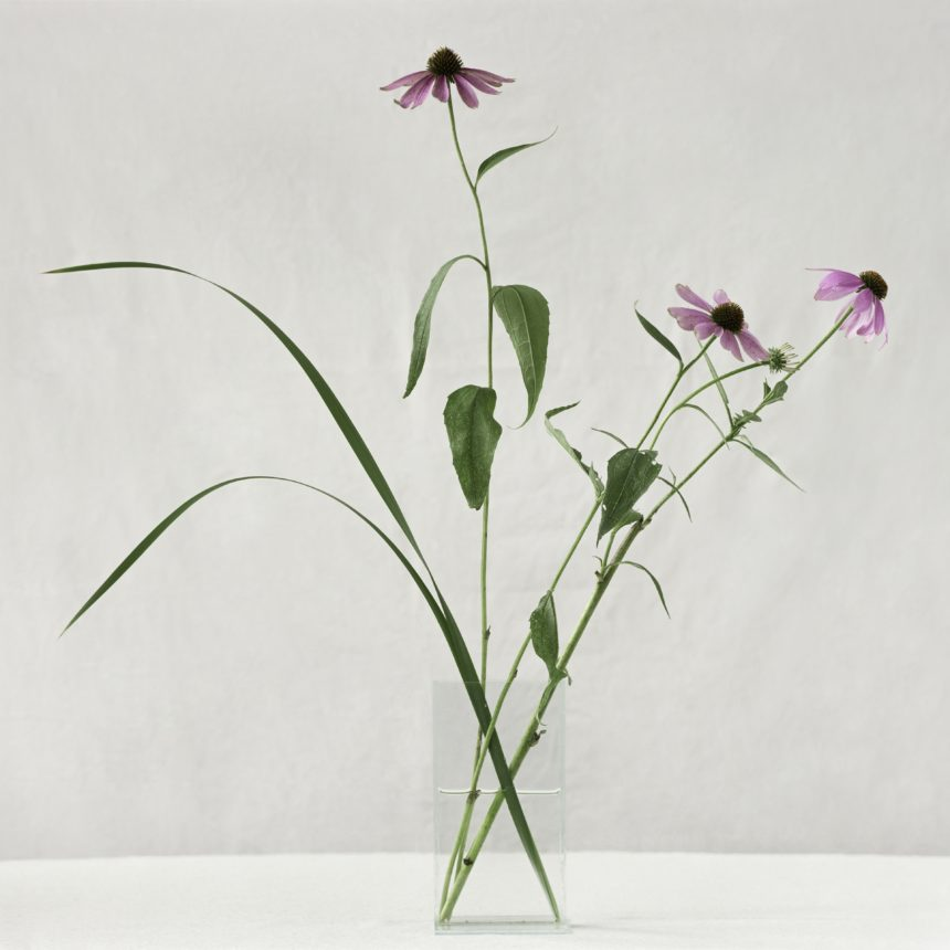 a gorgeous letter-sized folder using the image of Echinacea from renowned photographer Paula Chamlee